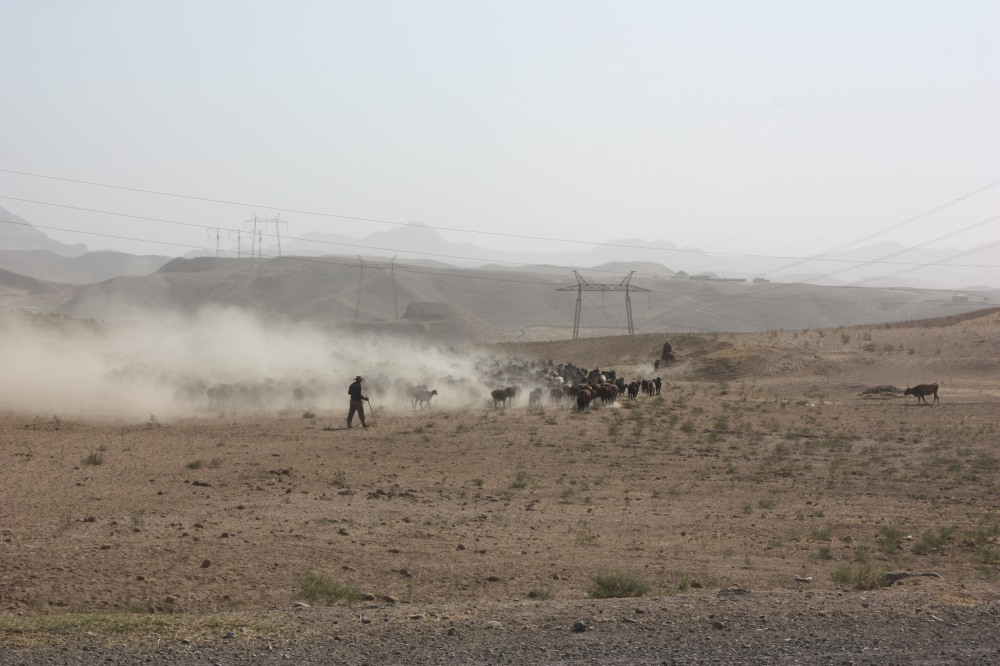 Sometimes the desert returned. A combination of the wind and gigantic herds of cattle turned it into a dustbowl.